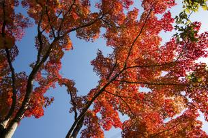 グリーンピア春日井の紅葉の写真素材 [FYI04769336]