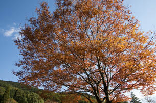 グリーンピア春日井の紅葉の写真素材 [FYI04769337]
