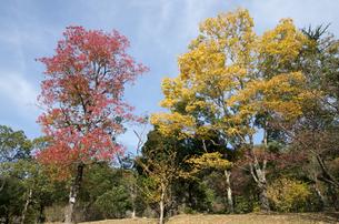 グリーンピア春日井の紅葉の写真素材 [FYI04769339]