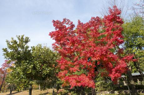 グリーンピア春日井の紅葉の写真素材 [FYI04769341]