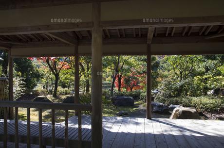 グリーンピア春日井の紅葉の写真素材 [FYI04769343]