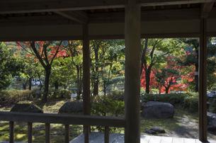 グリーンピア春日井の紅葉の写真素材 [FYI04769345]