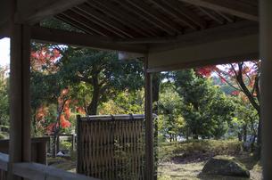 グリーンピア春日井の紅葉の写真素材 [FYI04769346]