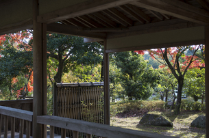 グリーンピア春日井の紅葉の写真素材 [FYI04769347]