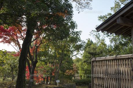 グリーンピア春日井の紅葉の写真素材 [FYI04769348]