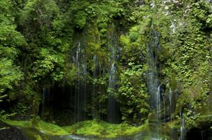 不易の滝の写真素材 [FYI04769358]