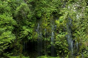 不易の滝の写真素材 [FYI04769359]