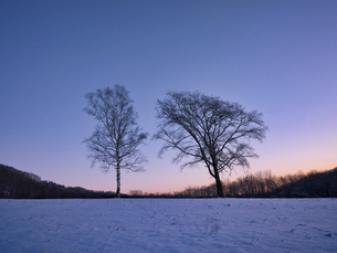 冬の木の写真素材 [FYI04769493]