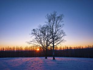 冬の木の写真素材 [FYI04769494]