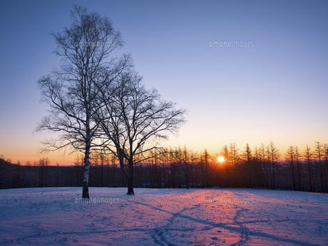 冬の木の写真素材 [FYI04769495]