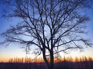 冬の木の写真素材 [FYI04769497]