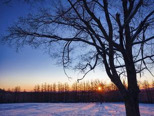 冬の木の写真素材 [FYI04769499]