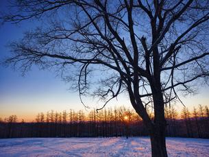 冬の木の写真素材 [FYI04769500]