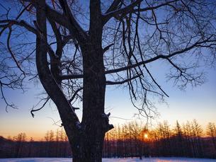 冬の木の写真素材 [FYI04769501]