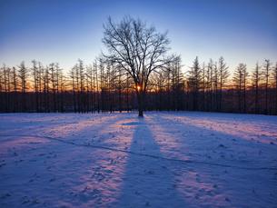 冬の木の写真素材 [FYI04769502]