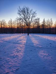 冬の木の写真素材 [FYI04769503]