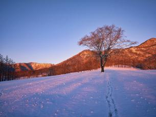 冬の木の写真素材 [FYI04769504]