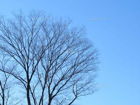 冬の空の写真素材 [FYI04769596]