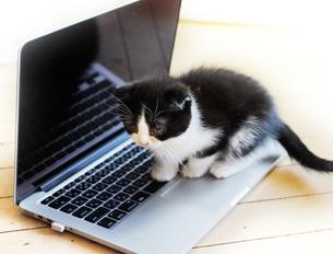 仔猫とパソコンの写真素材 [FYI04769845]