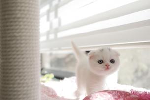 仔猫のいる生活の写真素材 [FYI04769851]