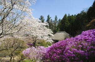 東秩父村 和紙の里の春 桜咲く頃の写真素材 [FYI04769891]