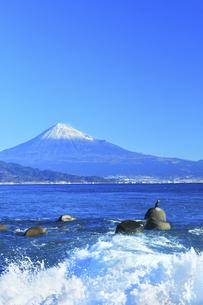 三保の松原より冠雪の富士山と鵜の写真素材 [FYI04769975]