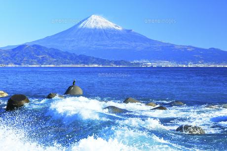 三保の松原より冠雪の富士山と鵜の写真素材 [FYI04769977]