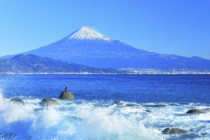 三保の松原より冠雪の富士山と鵜の写真素材 [FYI04769978]