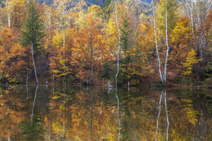 まいめの池の写真素材 [FYI04770026]