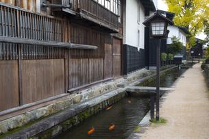 瀬戸川と白壁土蔵街の写真素材 [FYI04770034]