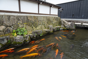 瀬戸川と白壁土蔵街の写真素材 [FYI04770035]