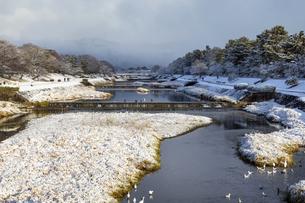 北大路橋からの賀茂川雪景色の写真素材 [FYI04770084]