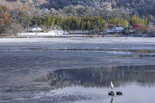 広沢池 雪景色の写真素材 [FYI04770091]