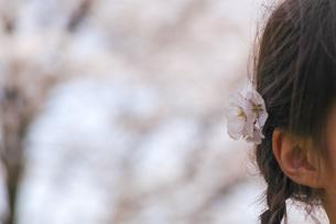 桜の花を髪飾りにして 春のイメージの写真素材 [FYI04770366]