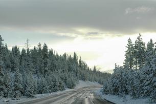 早朝の森の凍結した道路の写真素材 [FYI04770370]