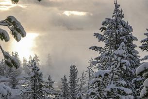 美しい森の冬の朝の写真素材 [FYI04770371]