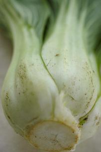 オーガニック野菜イメージ 青菜の写真素材 [FYI04770381]