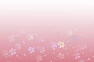 桜が散る背景の写真素材 [FYI04770505]
