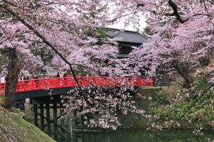 弘前公園のサクラの写真素材 [FYI04770528]