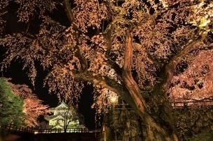 弘前公園のサクラのライトアップの写真素材 [FYI04770545]