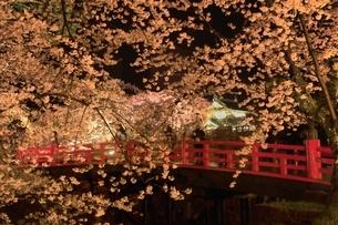 弘前公園のサクラのライトアップの写真素材 [FYI04770546]