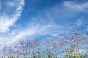 ススキと秋空の写真素材 [FYI04770630]