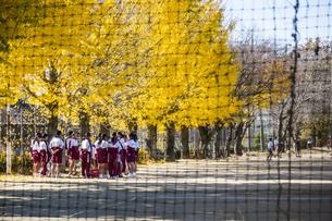黄葉のイチョウ並木と部活中の女子生徒の写真素材 [FYI04770658]
