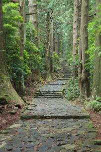熊野古道の写真素材 [FYI04770751]