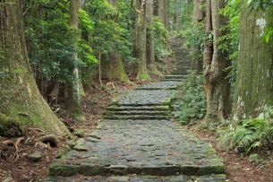 熊野古道の写真素材 [FYI04770752]