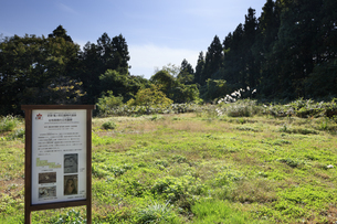 亀ヶ岡石器時代遺跡 台地南側の土坑墓群の写真素材 [FYI04770842]