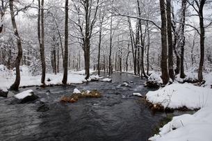 12月 雪の長瀬川 -裏磐梯の冬景色-の写真素材 [FYI04770865]