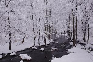 12月 雪の長瀬川 -裏磐梯の冬景色-の写真素材 [FYI04770867]