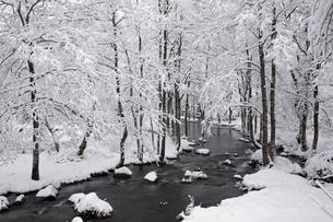 12月 雪の長瀬川 -裏磐梯の冬景色-の写真素材 [FYI04770868]