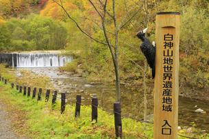 秋の白神山地世界遺産地域 入口の写真素材 [FYI04770878]